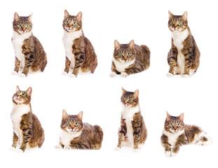set of cat