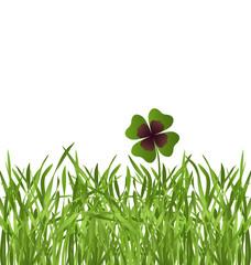 shamrock leaf in grass