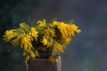 Blumenstrauß aus Mimosen