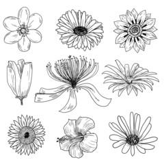 Flower set hand drawn.