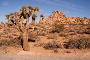 Joshua Tree With Rock Formation Landscape California Nature