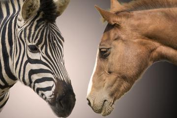 Aluminium Prints Zebra Zebra and horse