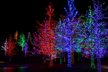 Trees tightly wrapped in LED lights for the Christmas holidays.