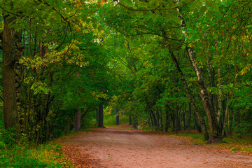 wide path in the autumn forest, morning shooting