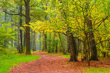 pedestrian path in autumn city forest park