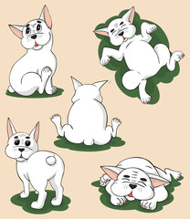 Funny white bulldog in five different poses