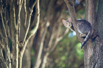 Wild cat. kitten sits on a tree branch in the forest.
