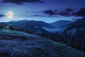 flowers on hillside meadow in mountain at night