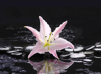 Lying down pink lily with therapy stones with reflection