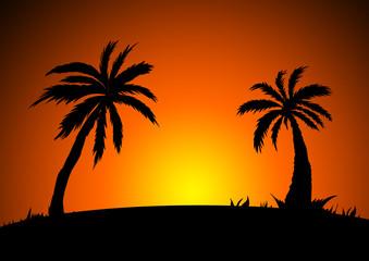 Palmen - Palms