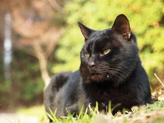 凛々しい黒猫