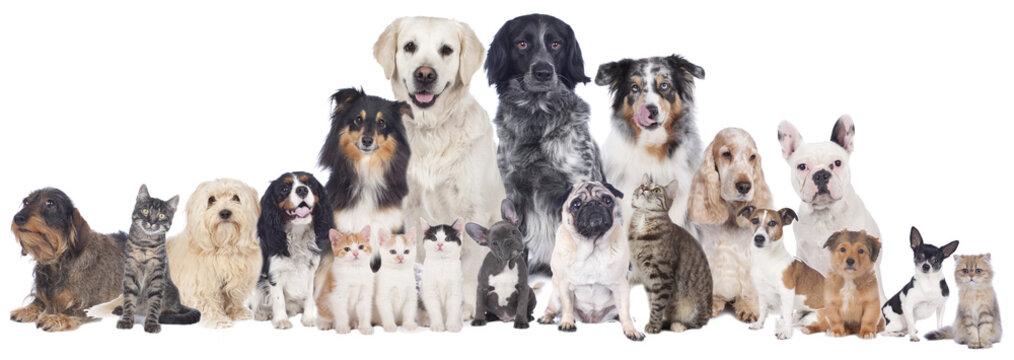 Große Hunde und Katzengruppe