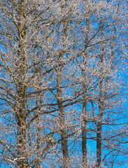 Fototapete - Winter background
