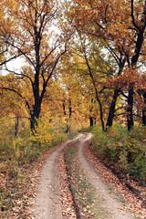 dirt road in an oak grov
