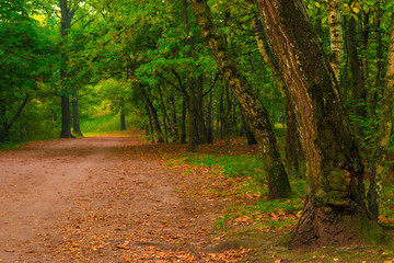 autumn forest, shot in the early morning