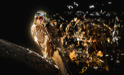 Falcon with open beak, abstract animal concept