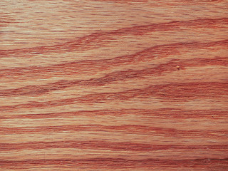 Red oak wood background