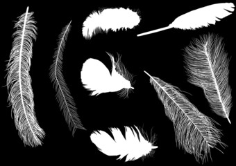 eight feather silhouettes isolated on black