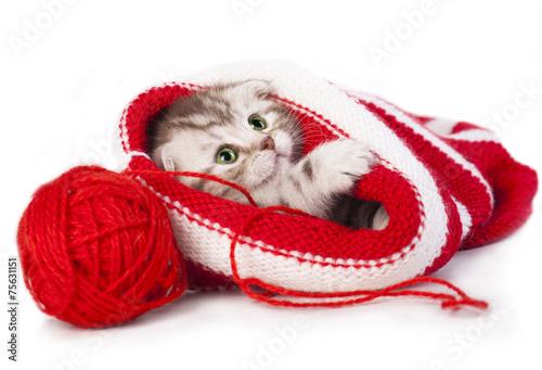 Кот под шапкой  № 3059131 загрузить
