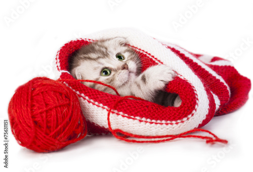 Котенок под шапкой бесплатно