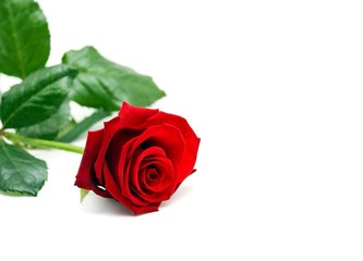 Rose mit Textfreiraum für Valentintstag - Muttertag - Hochzeit