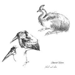 Ostrich and bird sketch