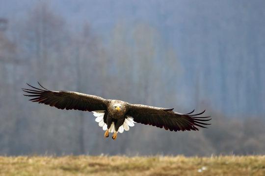 Offensive Attack Seeadler