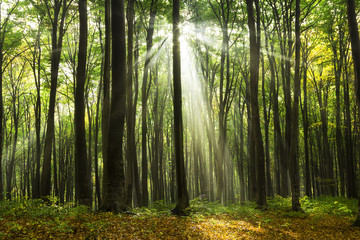 Sun rays coming through the trees in a forest