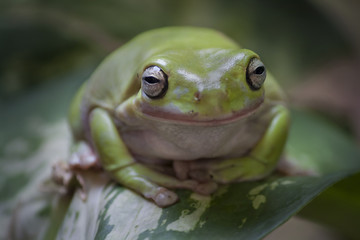 Frog on a leave