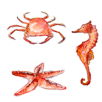 Watercolor sea creatures: crab, starfish, sea horse