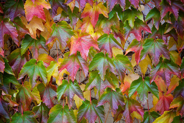 Buntes Herbstlaub Textur