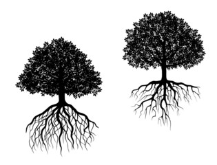 Isolated trees with roots