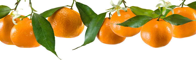 tangerines on a white background
