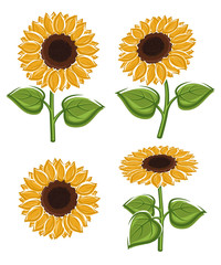Sunflower set. Vector