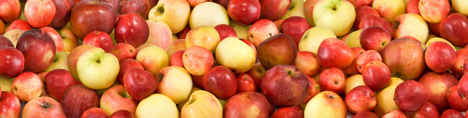 image of many ripe apples