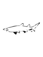 Shark fish cool