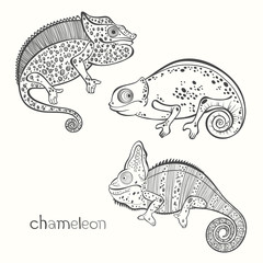 Set of chameleon isolated on white background. Hand drawn vector
