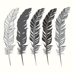 Set of feather isolated on white background. Hand drawn vector i