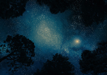 Starry sky through trees Wall mural
