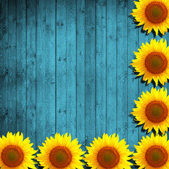 flower sunflower and turquoise wood background