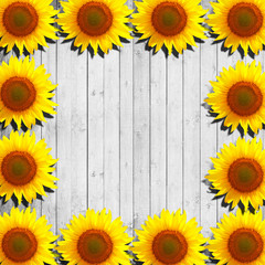 flower sunflower and white wood background