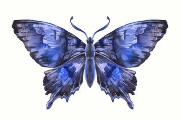 Бабочка акварельная на белом, вариант 7.