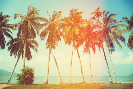 Palm trees at tropical coast, vintage toned and stylized