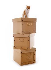 Pappkartons mit Katze