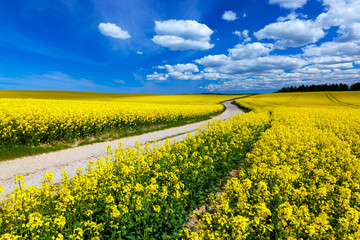 Autocollant pour porte Jaune Countryside spring field landscape with yellow flowers - rape.