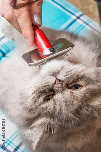 Toelettatura Del Gatto Persiano Stock Photo And Royalty Free Images