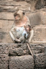Monkey mother and her baby.