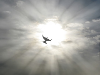 easter holy spirit peace dove flying open sky clouds sun rays