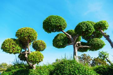 Bäume im Bonsaischnitt