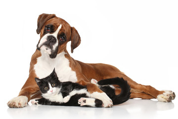 Wall Mural - Cat and dog together lying on the floor